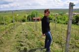 Kawałek Toskanii w Złotej pod Sandomierzem. Produkowane tu wino podbija rynek!