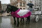 Kraków. Konie modnie odziane. Konie dorożkarskie zimą [ZDJĘCIA]