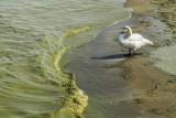 Sinice nad morzem 2019. LISTA: Które kąpieliska są zamknięte? Sprawdź, gdzie nad Bałtykiem nie można się kąpać 5.08.19