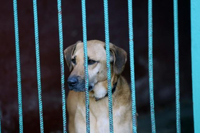 """Wolontariusze schroniska dla zwierząt """"Na Paluchu"""" chcą wrócić do pracy ze zwierzętami."""