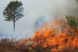 Uwaga! Najwyższy stopień zagrożenia pożarowego dla lubuskich lasów!