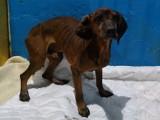 Pies zabrany z podwórka w gminie Iłowa. Wychudzony, zaniedbany, w tragicznym stanie