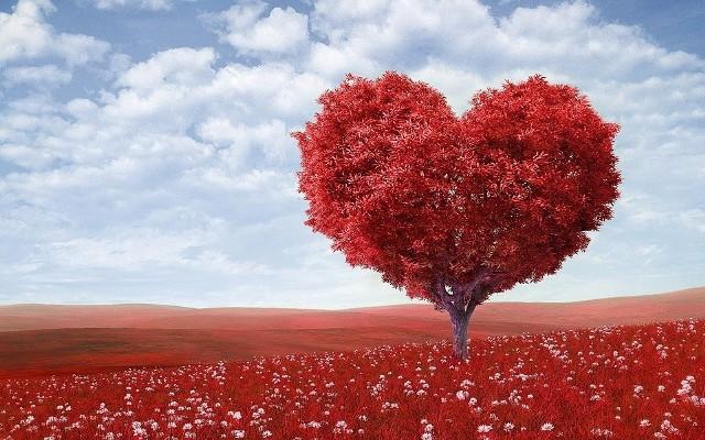 Walentynki 2019 Wierszyki Wiersze I życzenia Walentynkowe