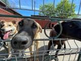 Stop kleszczom! Trwa zbiórka ochronnych preparatów dla schroniskowych psiaków z Gorzowa