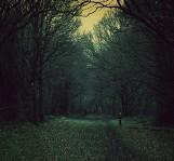 Idziecie do lasu? Uważajcie na straszną staruszkę... Przerażającą kobietę widziano na Dolnym Śląsku