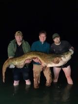 Takie giganty pływają w wielkopolskich jeziorach. Sum złowiony pod Skokami mierzył ponad 2 metry długości
