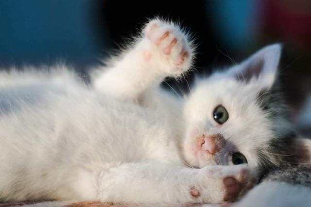 Kotki czekają na nasze wsparcie. Każdy z nas może pomóc