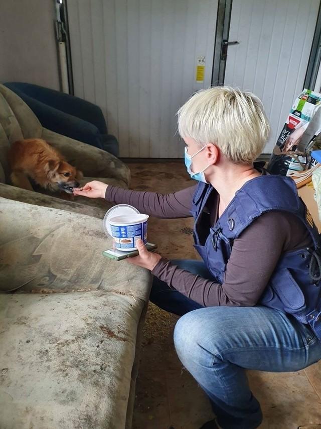 Potrzebna pomoc dla blisko 30 psów i ich samotnego i chorego właściciela