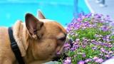 UWAGA! Trujące rośliny dla psa i kota. Najbardziej trujące rośliny w Polsce dla psów i kotów! Rośliny trujące dla zwierząt! 29.07.2021