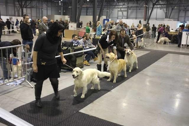 Wystawa psów na Expo Silesia w Sosnowcu