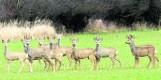 Rolnicy: Zwierząt jest za dużo - potrzebny odstrzał. Chodzi nie tylko o dziki