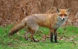 Biuro Inżyniera Gminy w Koluszkach pomaga dzikim zwierzętom