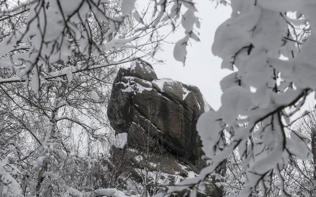 """Piękny zimowy krajobraz w Rezerwacie Przyrody """"Prządki""""."""