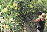 Grozi im bankructwo, bo ceny owoców są drastycznie niskie