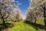 Łódzkie. Ile można zarobić przy zbiorach i innych pracach? Rolnicy i ogrodnicy z województwa łódzkiego poszukują pracowników 18.04.2021