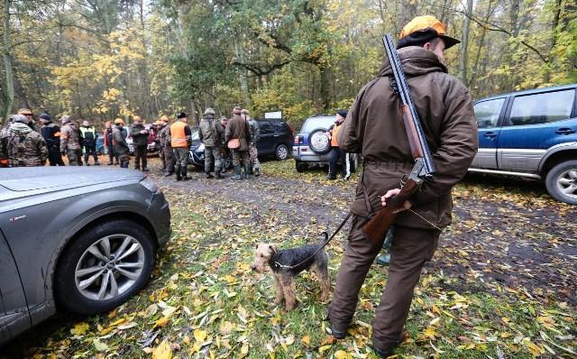 Odstrzał dzików w Wielkopolskim Parku Narodowym ma zakończyć się 30 listopada. Populacja ma być zmniejszona do 38 sztuk