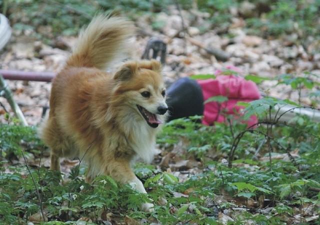 Wakacje to tradycyjnie okres, w którym ludzie porzucają najwięcej psów.