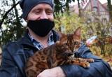 Taki cudny zwierzak mieszka w Zielonej Górze! Poznajcie przepięknego kota bengalskiego. Właściciel: to wymagająca rasa, nie jest dla każdego