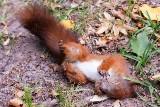 Białystok. Ktoś strzela do wiewiórek w Parku Konstytucji 3-maja? Na Zwierzyńcu znaleziono martwe zwierzęta ze śrutem w ciele (ZDJĘCIA)