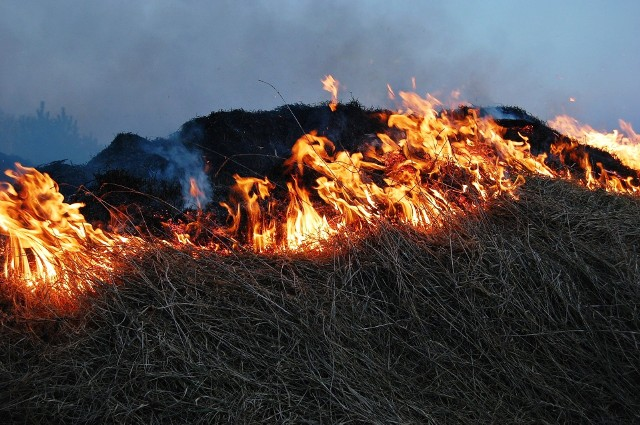 """Wypalanie traw na polach niesie ze sobą same zgubne skutki.Kliknij w przycisk """"zobacz galerię"""" i przesuwaj zdjęcia w prawo, naciskając strzałkę lub przycisk NASTĘPNE."""