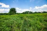 Zielone tereny Czyżyn, spacerujący mieszkańcy. Tu ma powstać Centrum Nauki i droga dojazdowa do niego [ZDJĘCIA]