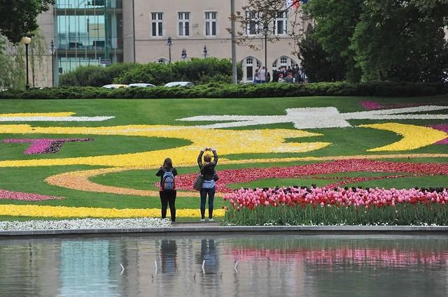 Dywan z tulipanów w Poznaniu robi wielkie wrażenie! Zobaczcie sami!