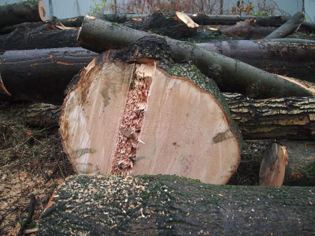 Wycinka na Grzegórzkach, przy Rogozińskiego. Pod topór poszło w sumie siedem drzew. Deweloper twierdzi, że były martwe. Mieszkańcy nie są przekonani