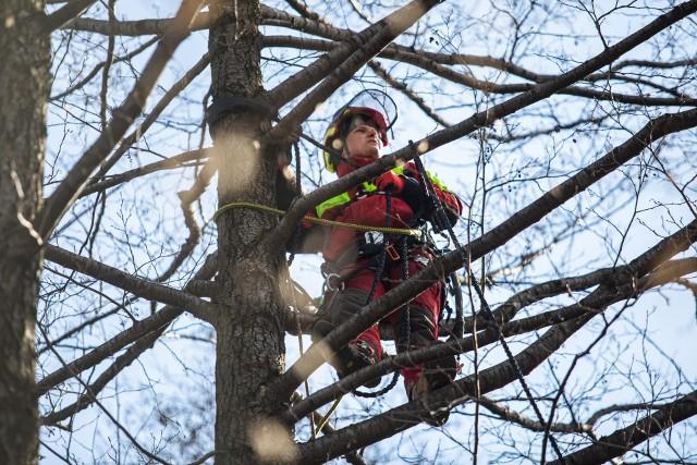 Liny między koronami drzew nad ul. Górską zostały zawieszone w trzech miejscach.Zobacz kolejne zdjęcia. Przesuwaj zdjęcia w prawo - naciśnij strzałkę lub przycisk NASTĘPNE