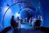 Podwodna kolacja w zoo we Wrocławiu. Anna Wyszkoni, Robert Janowski i inni jedli pod wodą