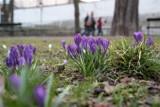Kalendarzowa wiosna rozpoczęta! Dziś ulgowo do zoo!