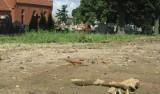 Na cmentarzu w Strzelcach znów walają się ludzkie kości!