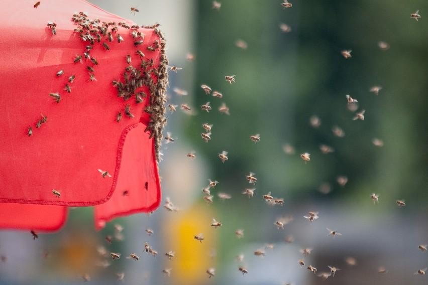 Kto ma pszczoły ten ma miód. Urzędnicy postawią pasiekę pod słupskim ratuszem
