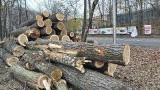 W Dąbrowie Górniczej Ząbkowicach wytną 18 hektarów Lasu Bienia? Mieszkańcy protestują