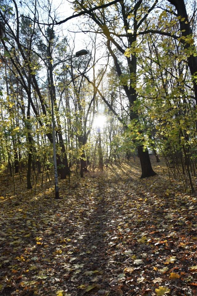 Park Braniborski w Zielonej Górze jesienią.