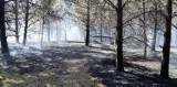 Pożar lasu na Kaszubach. Straż pożarna walczyła z ogniu w Gołuniu w gm. Kościerzyna. Do akcji skierowano 20 zastępów!