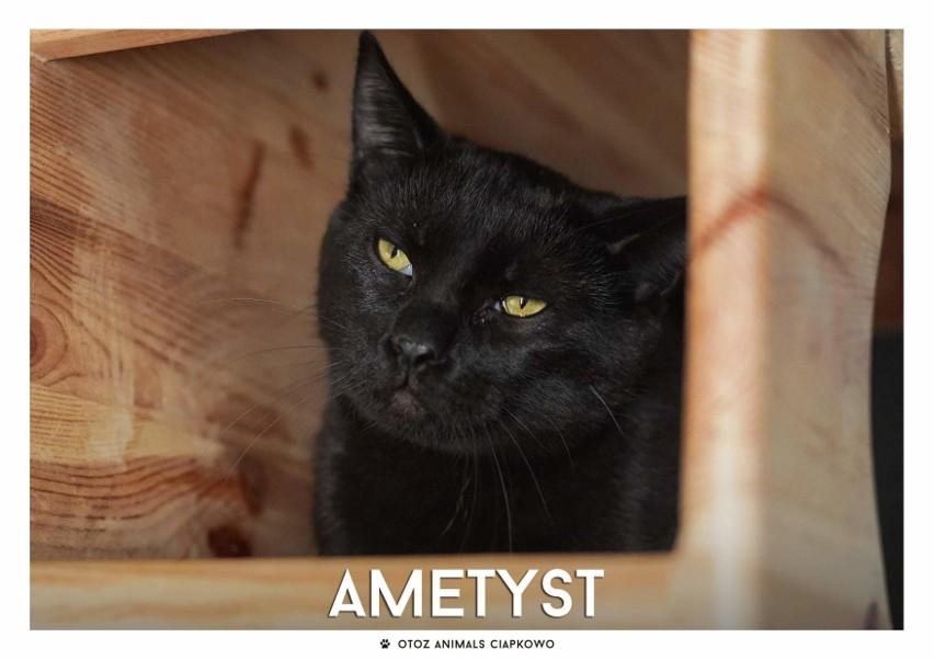 IMIĘ: Ametyst(268/20)...