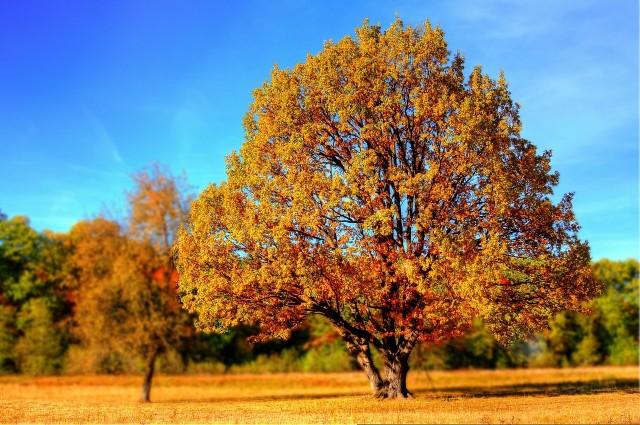 Prognoza pogody na 15 października. To będzie piękny jesienny dzień
