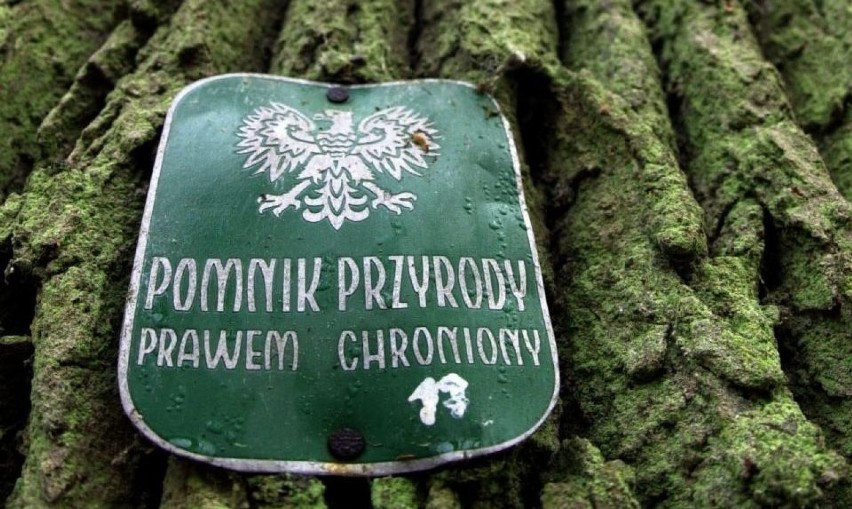 Gmina Pelplin z dofinansowaniem na działania w zakresie ochrony przyrody i edukacji ekologicznej