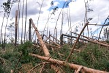 Dwa lata po wielkiej nawałnicy. Pomorscy leśnicy podsumowują skalę zniszczeń [wideo]