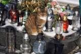 Ktoś nie miał skrupułów i porzucił koty na cmentarzu w Tarnowie! Groziło im zamarznięcie