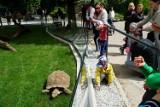 W Starym Zoo otwarto domek dla żółwi. Tak świętowano w Poznaniu Dzień Żółwia