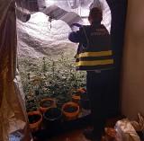 Policjanci w Łęczycy zabezpieczyli ponad kilogram marihuany i 43 krzaki. Podejrzanemu grozi kara 15 więzienia