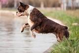 Psychologia zwierząt. Jak walczyć z psim roztargnieniem? Radzi Miriam Gołębiewska