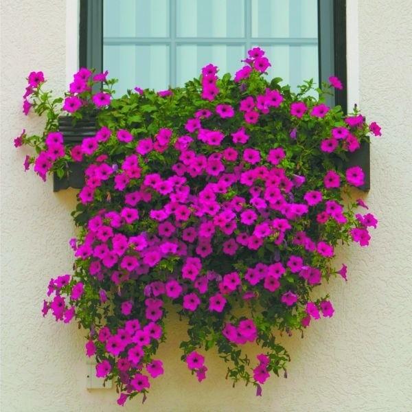 Kwiaty Na Balkonie Kurier Poranny