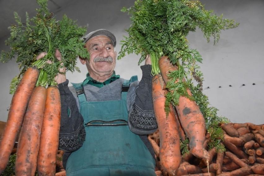 Rolnik Aleksander Olejniczak z podwągrowieckiego Rgielska wyhodował olbrzymią marchew. Największe okazy mają ok. 40 cm długości i ważą ponad kilogram!Zobacz więcej zdjęć ---->