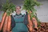 Rolnik spod Wągrowca wyhodował marchewki - giganty. Ważą ponad kilogram!
