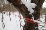Wycinka kilkudziesięciu drzew w parku w centrum Wrocławia. Mają jeszcze przysłużyć się przyrodzie