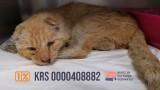 Przekaż 1% na bezdomne koty