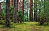 Nocowanie w lesie w niektórych miejscach będzie legalne od 1 maja. Lasy Państwowe wyznaczyły 429 miejsc legalnego nocowania na dziko