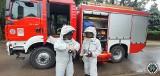 Plaga szerszeni w Podlaskiem. Strażacy interweniowali już prawie 300 razy (zdjęcia)
